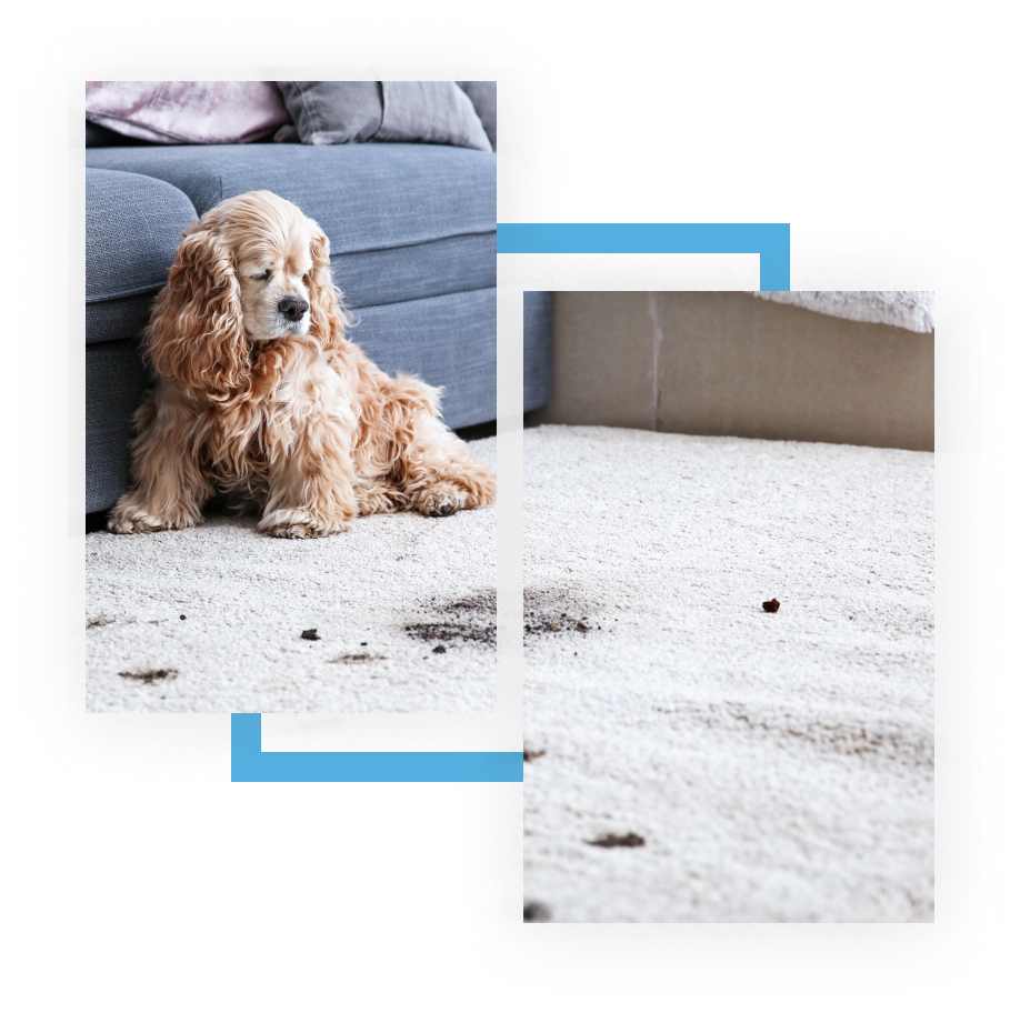 how much is carpet cleaning